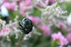 Flor seca Fotografía de archivo
