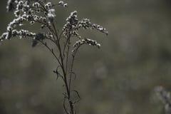 Flor seca da queda em um campo foto de stock