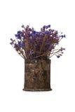 Flor seca en cubo del metal Foto de archivo libre de regalías
