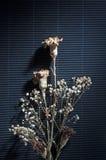 Flor seca en negro Foto de archivo
