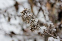 Flor seca no inverno Fotos de Stock