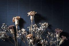 Flor seca no preto 2 imagem de stock