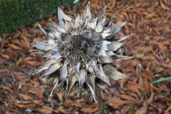 Flor secada con las hojas de otoño en el fondo fotografía de archivo