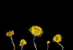 Flor secada en fondo imagen de archivo
