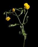 Flor secada en fondo foto de archivo