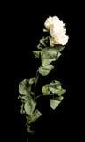 Flor secada en fondo foto de archivo libre de regalías
