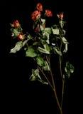 Flor secada en fondo imagenes de archivo