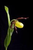 Flor secada en fondo fotografía de archivo libre de regalías