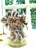 Flor secada en vidrio Fotos de archivo libres de regalías