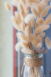 Flor secada no vaso, ramalhete de flores secadas no vaso Imagens de Stock Royalty Free