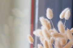 Flor secada no vaso, ramalhete de flores secadas no vaso Foto de Stock Royalty Free