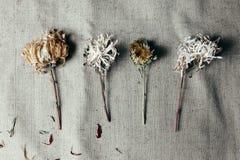 Flor secada sobre harpillera vieja negra fotos de archivo