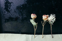 Flor secada sobre viejo fondo negro del metal imagenes de archivo