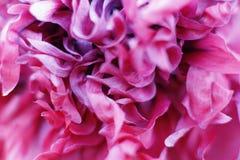 Flor sedosa Imagen de archivo