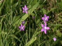Flor selvagem filme