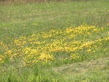 Flor selvagem vídeos de arquivo