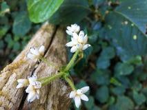 Flor selvagem Fotografia de Stock