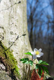 Flor selvagem Foto de Stock Royalty Free
