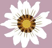 Flor selvagem Imagem de Stock