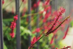 Flor selvagem cor-de-rosa bonita na cerca fotos de stock
