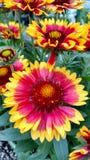 Flor selvagem da criança Foto de Stock