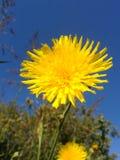 Flor selvagem 5 da série imagem de stock royalty free