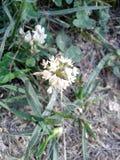 Flor selvagem 9 da série foto de stock royalty free