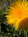 Flor selvagem da série imagem de stock