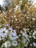 Flor selvagem da série fotografia de stock