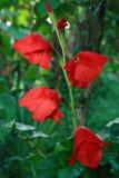 Flor selvagem desconhecida imagens de stock