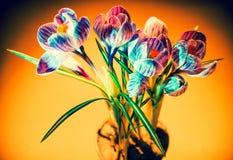 Flor selvagem do açafrão colorido Foto de Stock Royalty Free
