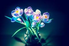 Flor selvagem do açafrão colorido Fotografia de Stock
