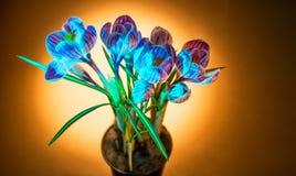 Flor selvagem do açafrão colorido Fotos de Stock