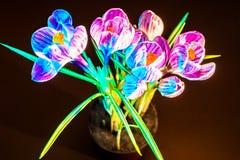Flor selvagem do açafrão colorido Fotos de Stock Royalty Free