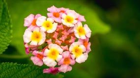 Flor selvagem e as folhas Fotografia de Stock Royalty Free