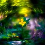 flor selvagem e swirly bokeh imagens de stock