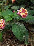 Flor selvagem mas bonita imagem de stock