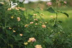 Flor selvagem na floresta imagens de stock