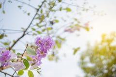 Flor selvagem roxa no ramo contra o céu azul imagens de stock