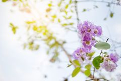 Flor selvagem roxa no ramo contra o céu azul fotos de stock