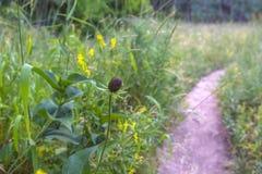 Flor selvagem sem pétalas ao lado de uma fuga de caminhada imagens de stock