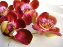 Flor siete del obús Imagen de archivo libre de regalías
