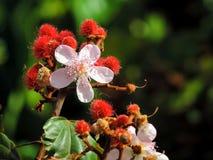 Flor Silvestre стоковое изображение