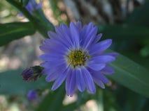 Flor. Silvestre uy stock photography