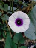 Flor simples Fotografia de Stock