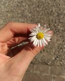 Flor sin defectos Fotos de archivo libres de regalías