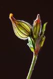 Flor sin los pétalos Imagenes de archivo