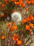 Flor singular Imagem de Stock