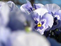 Flor soñadora Fotos de archivo libres de regalías