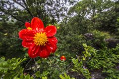 Flor sob a chuva fotografia de stock